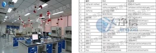 低温破碎酵母细胞使用高通量组织研磨仪实验