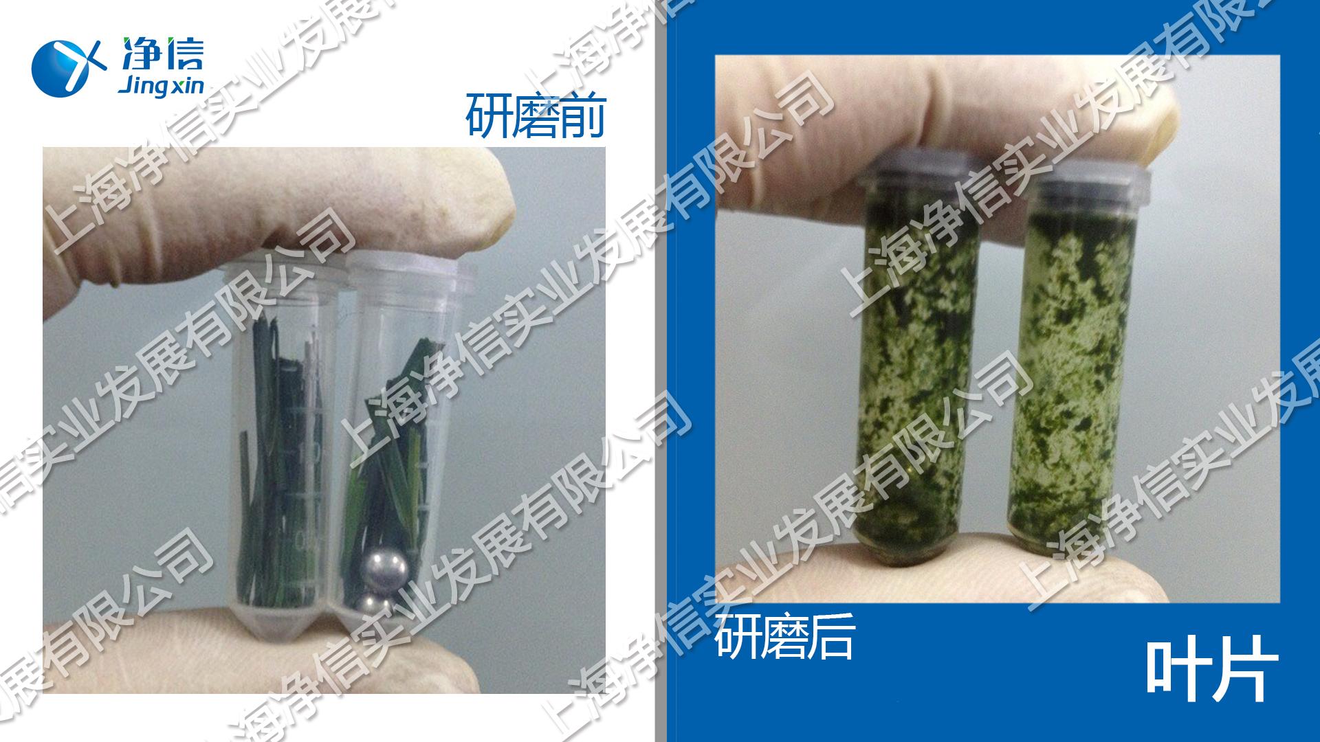 生物样品均质器 型号:Tissuelyser-24l