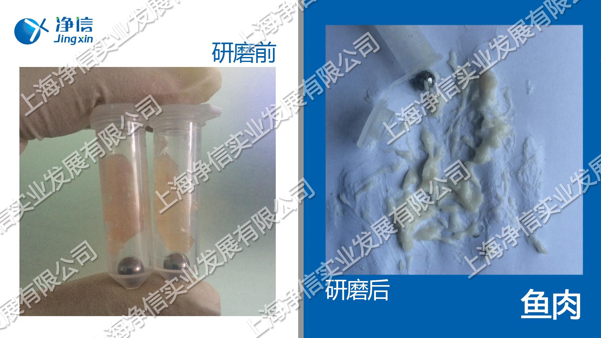 生物样品均质仪 型号:Tissuelyser-24l