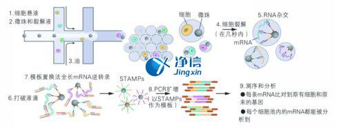 中国人自己的单细胞测序仪来了!,Drop-seq